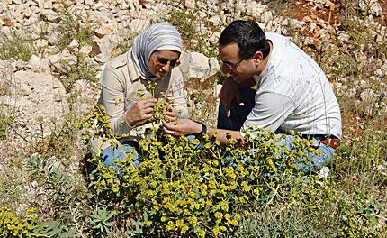 houris-flower-guide-q&a-01-430.jpg